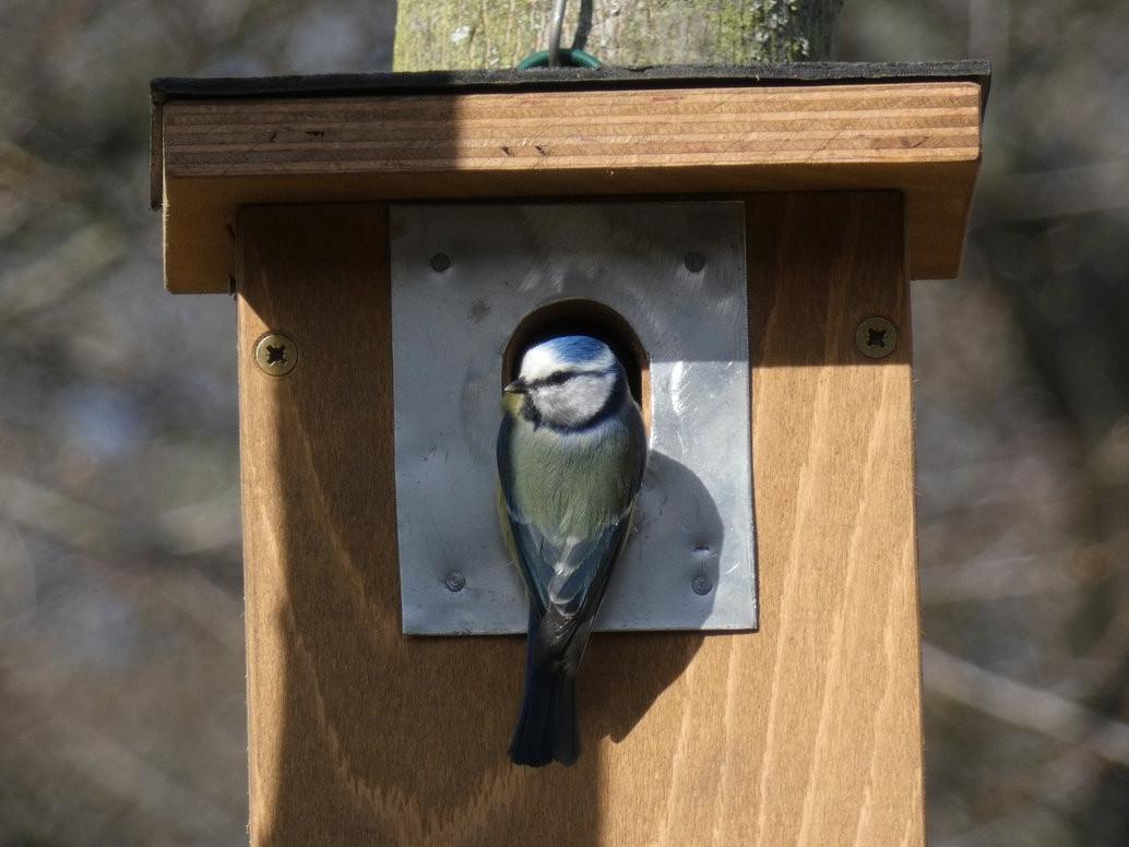 Oplechování vletu ptačí budky