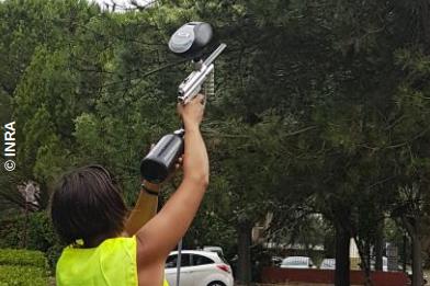 Pheroball při střelbě do korun stromů z paintballové pistole. Zdroj: INRA UEFM